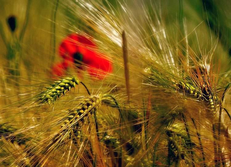 rolnictwo informacje rolnicze