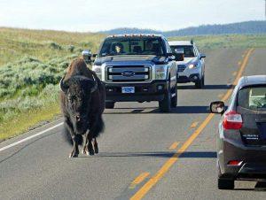 dowcipy o Amerykanach ciekawostki humor kawały USA żarty Ameryka funny Stany Zjednoczone bizon samochody droga