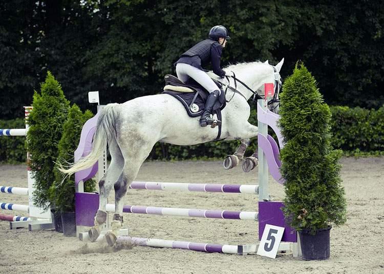 humor jeździecki dowcipy wyścigi konne zawody jeźdźcy kawały konie