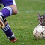 pilka nożna dowcipy o piłce nożnej humor kawały śmieszne obrazki memy futbol
