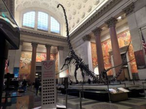 Muzeum Historii Naturalnej, Nowy Jork wnętrze szkielet dinozaura eksponaty