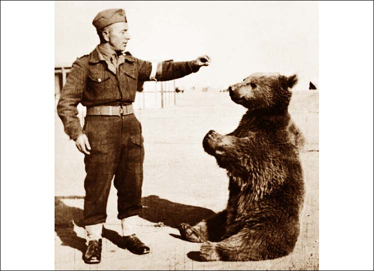 Wojtek niedźwiedź Monte Cassino