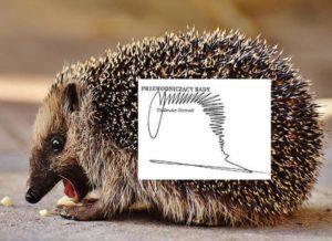 jeż jeże zwierzęta autografy