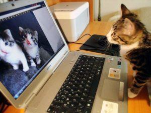 koty głaskanie badania naukowe