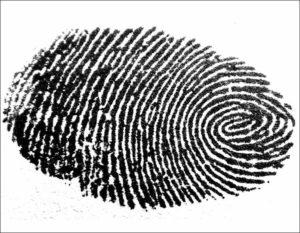 linie papilarne odciski palców