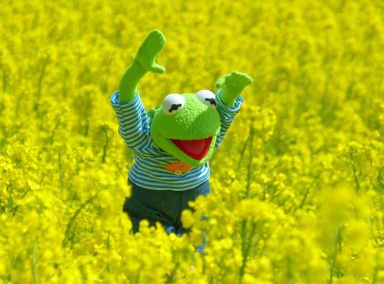 Muppet Show Kermit Jim Henson ciekawostki kukiełki