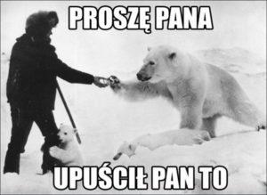 niedźwiedzie polarne Arktyka