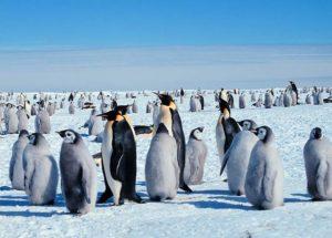pingwiny Antarktyda praca ogłoszenia listonosz