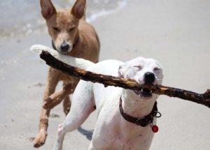 psy ciekawostki koty