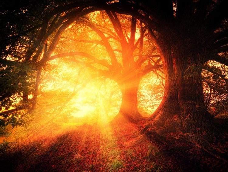 świecące drzewa zieleń rośliny przyroda jesienne przysłowia z jesienią