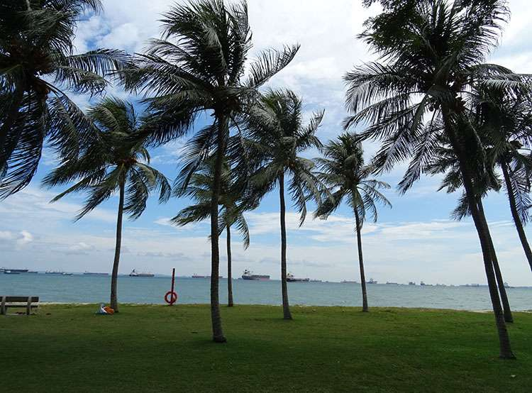 Singapur palmy plaza morze ocean