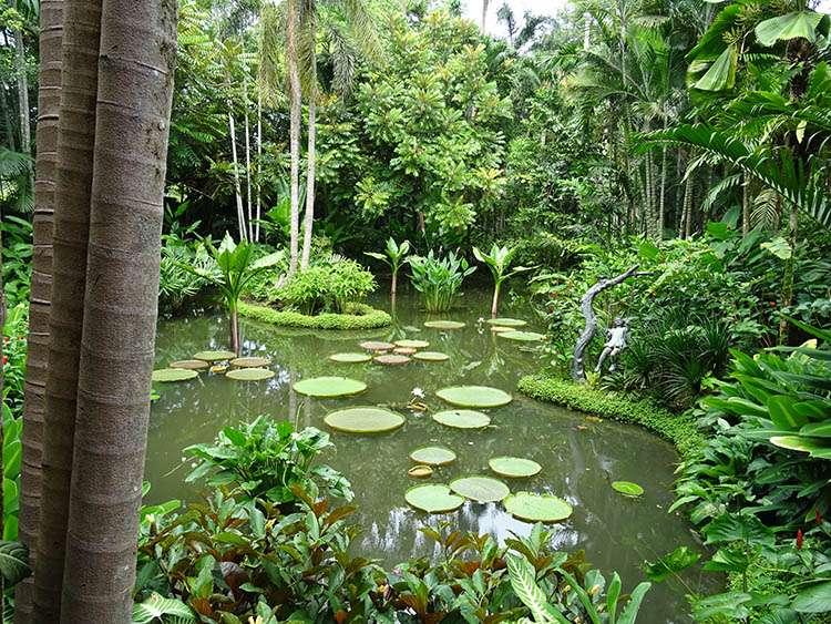 Singapore Botanic Gardens Singapur ciekawostki
