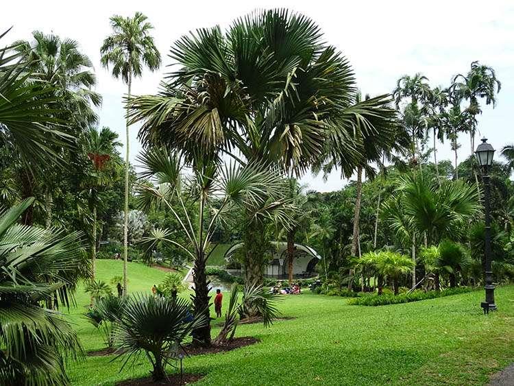 Singapore Botanic Gardens Singapur