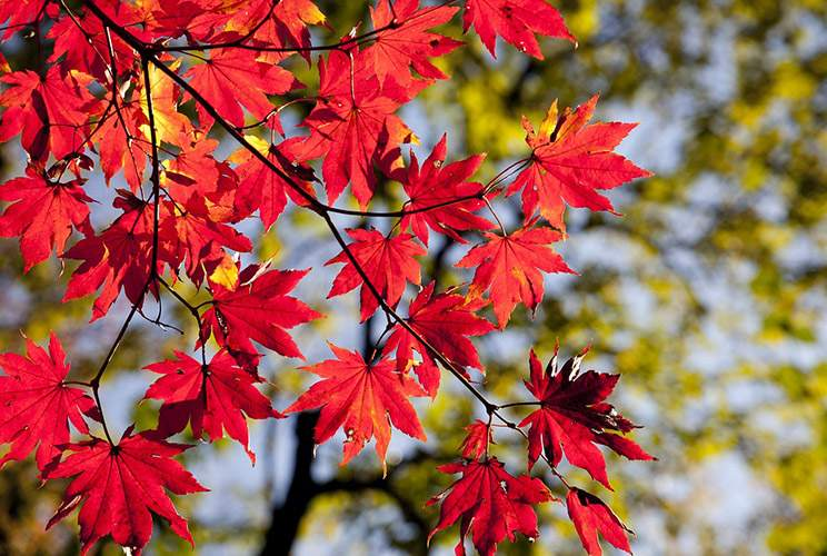 Przysłowia Związane Z Porami Roku Wiosna Lato Jesień