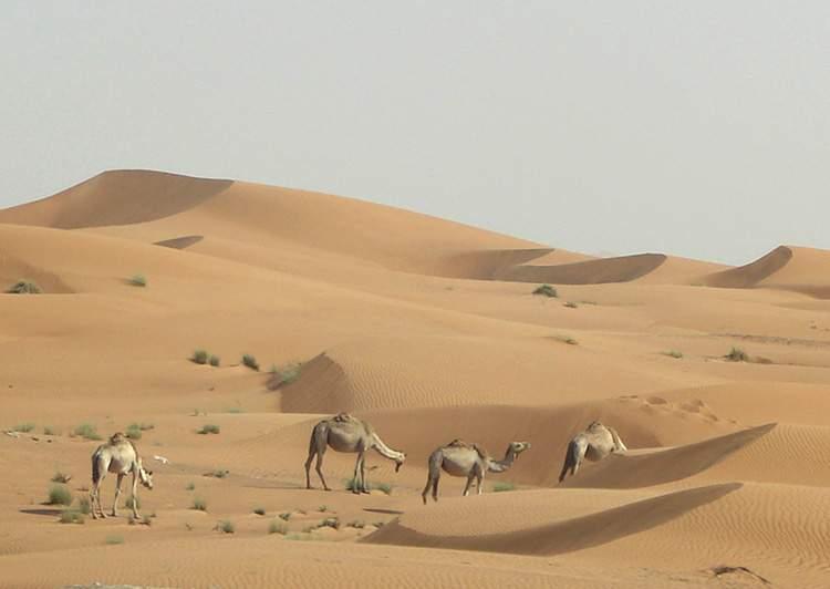 pustynia Ar-Rab al-Chali Półwysep Arabski