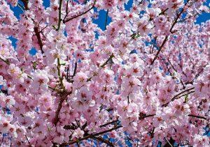 wiosna przysłowia o wiośnie