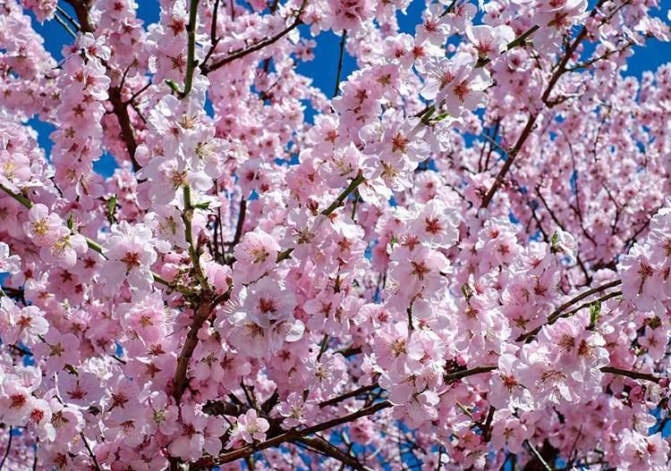 wiosna przysłowia o wiośnie dowcipy o wiośnie humor kawały