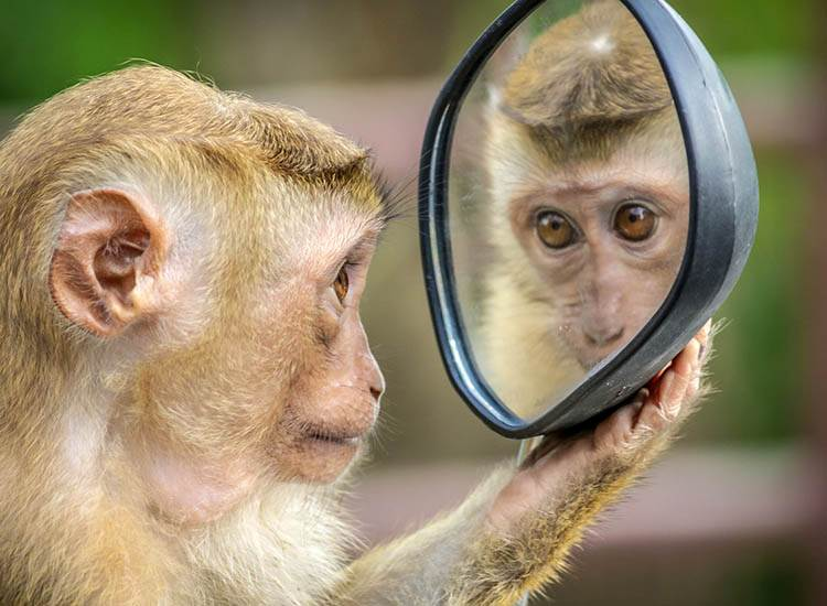 dowcipy o małpach humor małpa kawały małpy goryle małpki