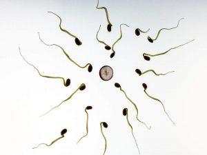 zapłodnienie jak zajść w ciążę