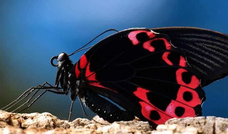motyle ciekawostki motyl o motylach