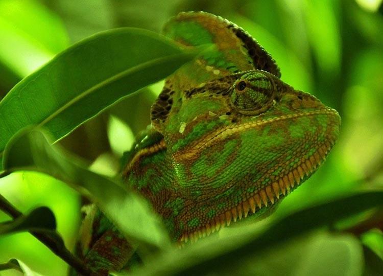 kameleon maskowanie kamuflaż pojazdu wojskowego