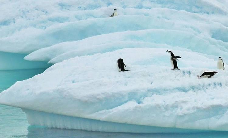 pingwin ciekawostki o pingwinach pingwiny