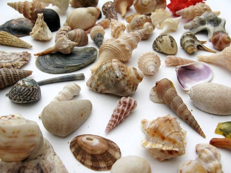 ślimak ciekawostki o ślimakach ślimaki muszla ślimaka