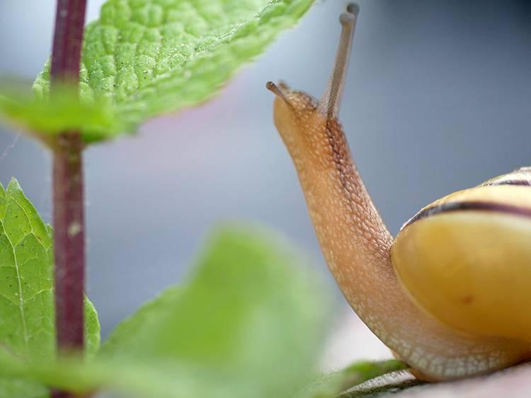 ślimak ciekawostki o ślimakach ślimaki