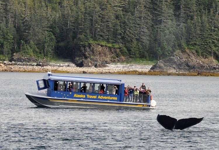 wieloryb ciekawostki o wielorybach wieloryby walenie