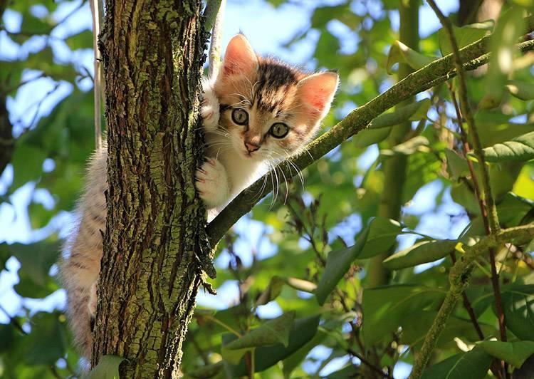 ciekawostki o zwierzętach zwierzęta kot koty