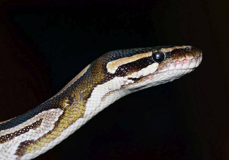 ciekawostki o zwierzętach zwierzęta wąż węże