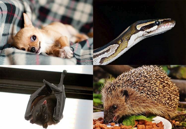 ciekawostki o zwierzętach zwierzęta