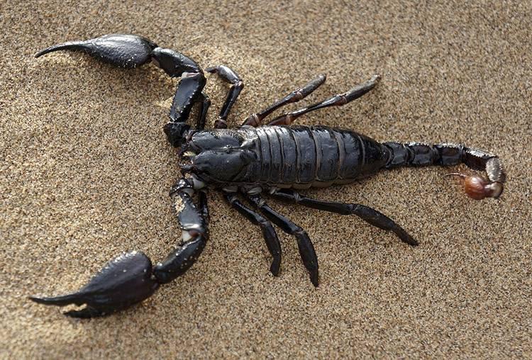 ciekawostki o zwierzętach zwierzęta skorpion skorpiony
