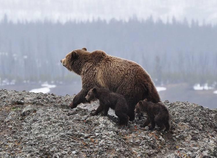 sen zimowy hibernacja zwierzęta zima niedźwiedź