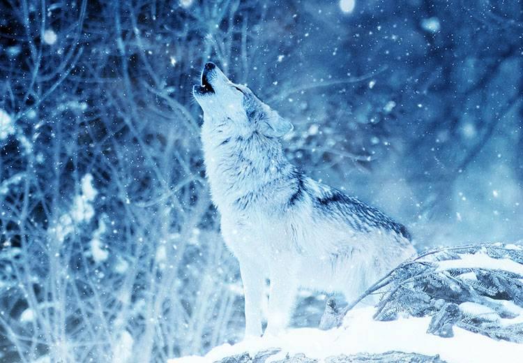 sen zimowy hibernacja zwierzęta zima wilk