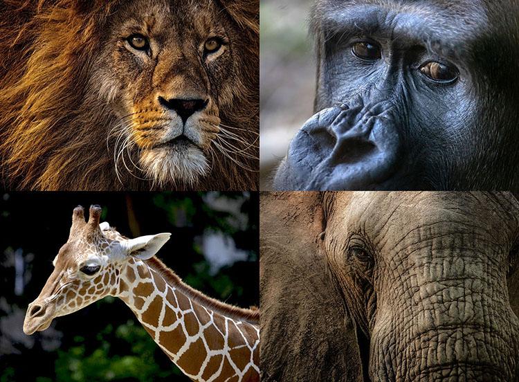 ciekawostki o zwierzętach Afryki