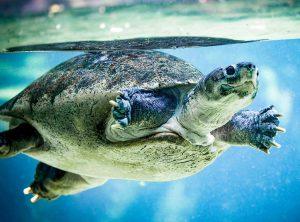 dowcipy o żółwiach żółw humor żółwie kawały