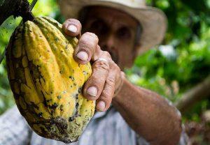 Kolumbia ciekawostki o Kolumbii kakaowiec