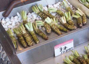wasabi ciekawostki chrzan japoński