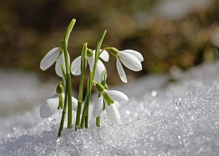 Topienie Marzanny Zwyczaj Topienia Marzanny Wiosna