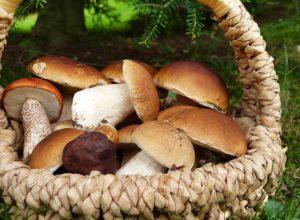 grzyby leśne ciekawostki