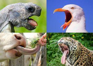język języki zwierząt ciekawostki o językach zwierzęta