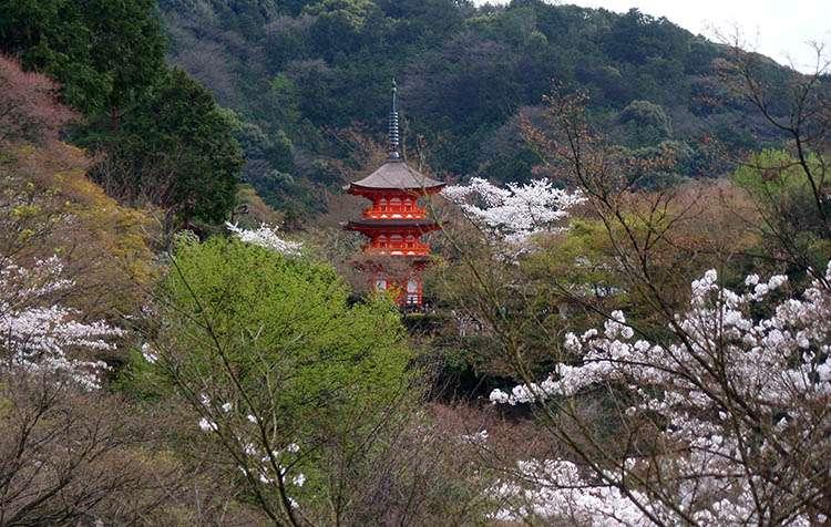 kraj kwitnącej wiśni Japonia Kyoto świątynia Kiyomizu
