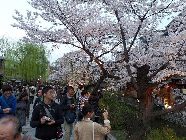 kraj kwitnącej wiśni Japonia Kioto podróż poślubna ciekawe miejsca