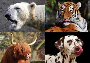 zwierzęta ciekawostki o zwierzętach język zwierząt