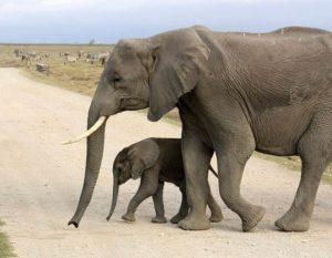 Amoseli Park Narodowy Kenia Afryka atrakcje zwierzęta parki narodowe