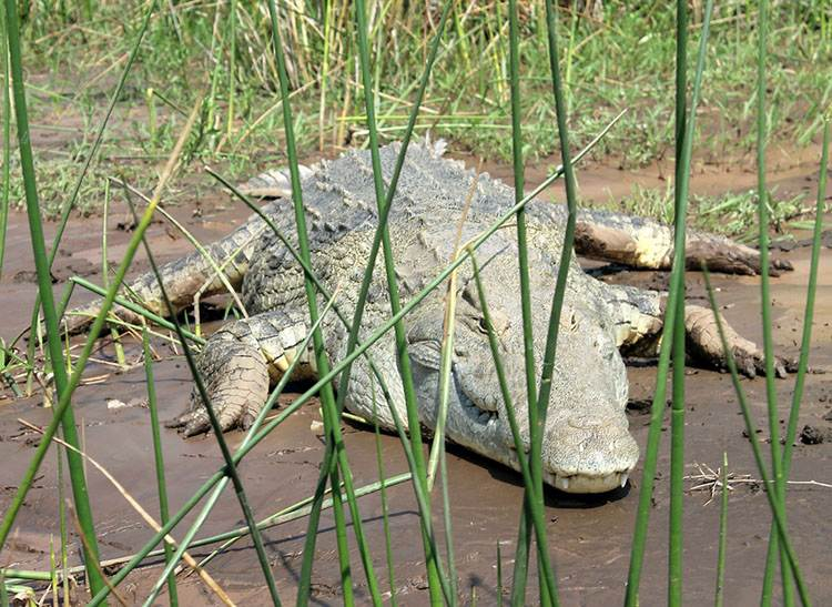 jezioro Chamo Etiopia ciekawostki o Etiopii atrakcje przyroda