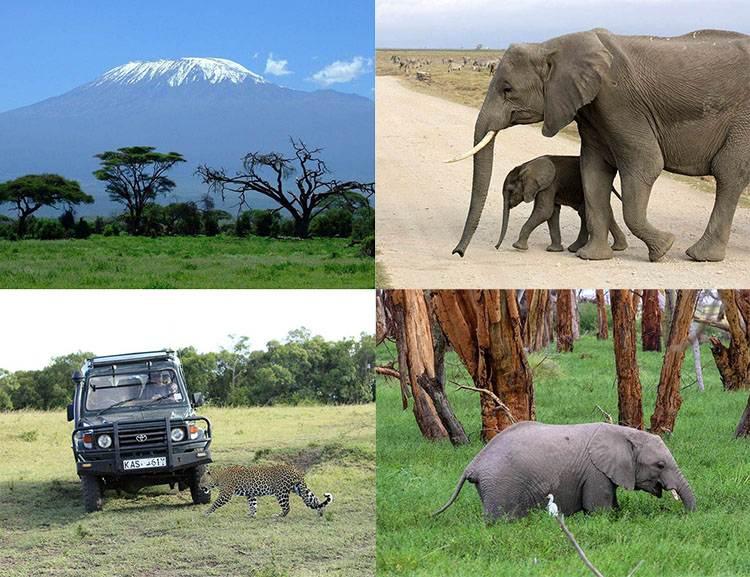 Kenia Afryka atrakcje safari zwierzęta parki narodowe