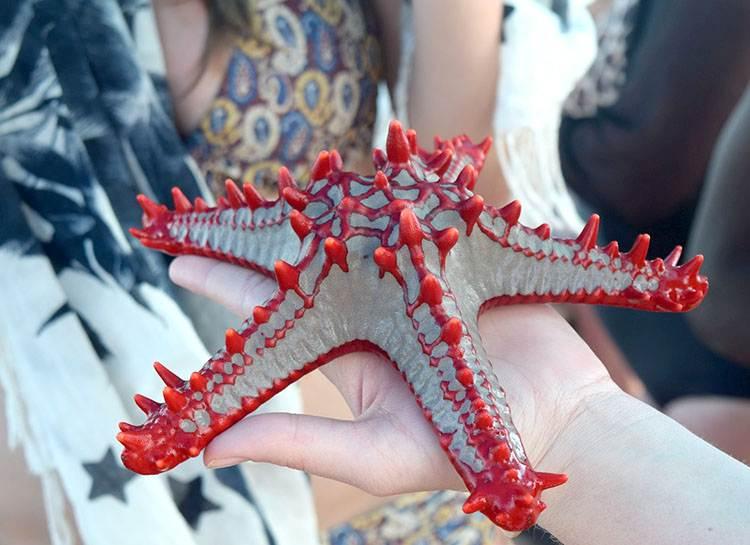 rozgwiazda wyspa Zanzibar ciekawostki o Zanzibarze atrakcje