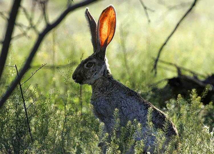 zając dowcipy o zwierzętach leśnych humor las zwierzęta